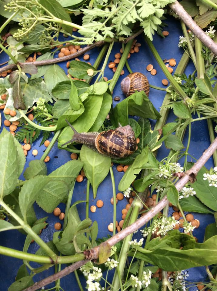 Snails at our Swanbourne nursery